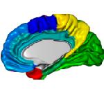 morphometric_analysis