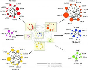Modular architecture of the human cortical network. Six modules of human cortical network displayed in groups. Red: module I, orange: module II, pink: module III, blue: module IV, yellow: module V, green: module VI. The intermodular connections and intramodular connections of the network are shown in dark and gray lines, respectively.